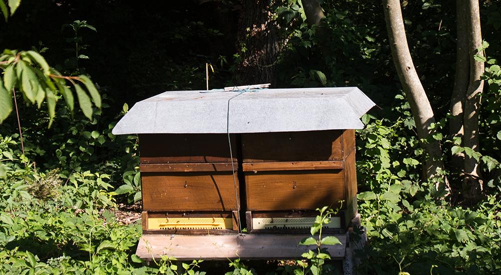FPÖ-KO Mahr und VP-KO Kirchmayr: Regelung für Bienen im Wohngebiet auf Schiene