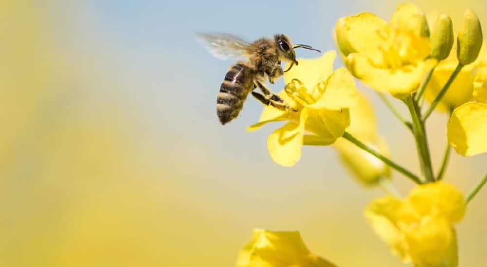 Bienenhaltung im Wohngebiet: Natur erhalten und Lebensqualität steigern!