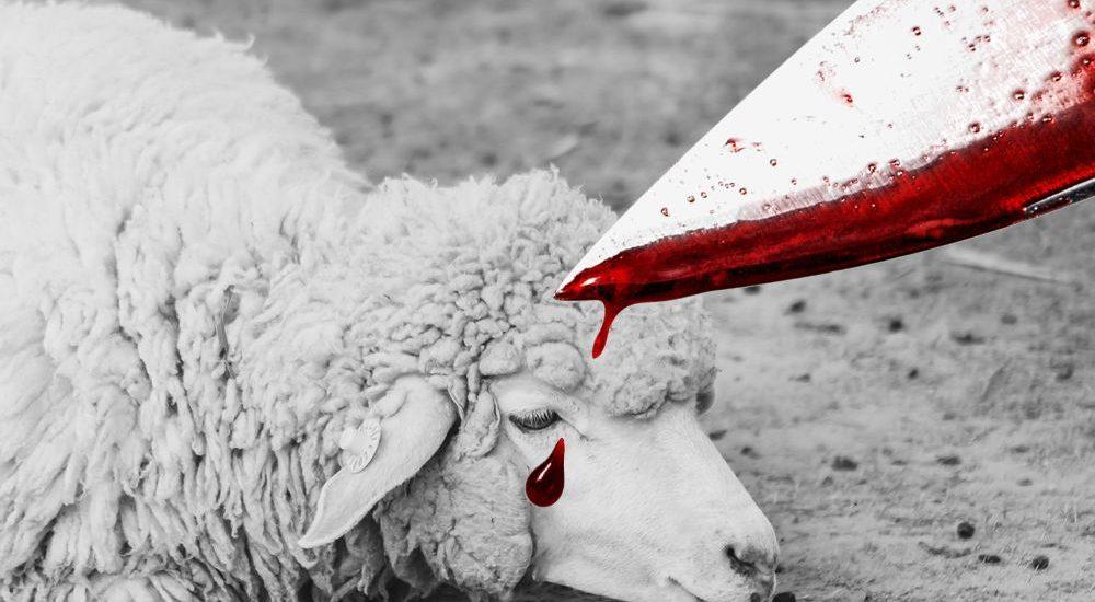 Illegale Schächtungen: Tierquälerei ist mitten unter uns