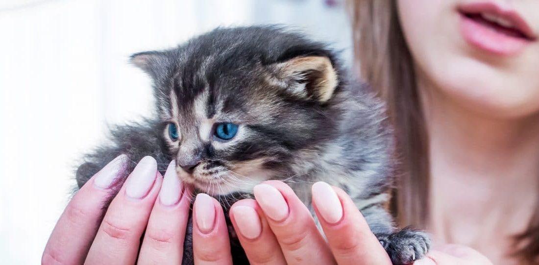 Zwischenerfolg bei FPÖ-Initiative: Härtere Strafen für Tierquäler!